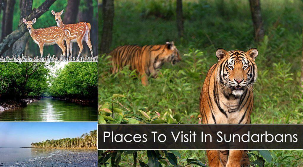 -Sundarbans-F